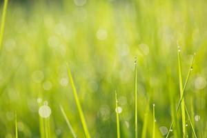 rosée sur fond de verdure d'herbe photo