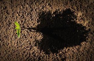 concept de croissance et de rse de l'entreprise photo