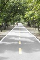 route de campagne qui traverse l'allée des arbres photo