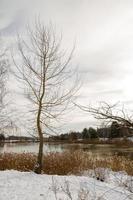 paysage, un arbre sans feuillage sur un rivage enneigé près d'une rivière gelée photo