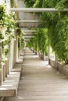 allée verte du parc, bancs en bois et murs avec roses blanches photo