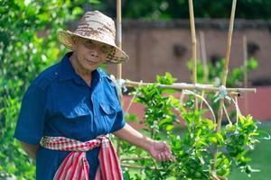 agriculteur mature souriant et debout à côté des plantes photo