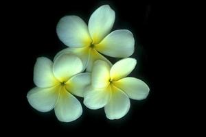 bouquet de trois fleurs d'arbre photo