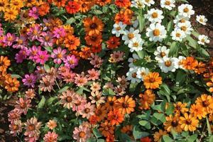 lit de fleurs photo
