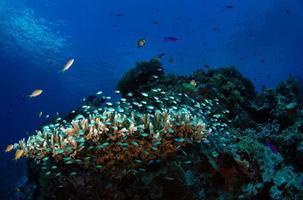 banc de petits poissons de verre photo