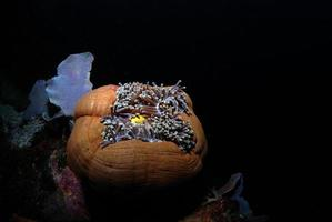 anémone de mer dans la mer photo