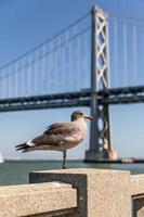 mouette se tient par une jambe avec un arrière-plan flou du pont. photo