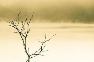 lac brumeux et branche d'arbre ton divisé photo