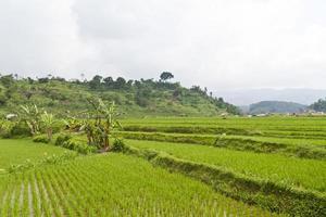 rizière à flanc de colline photo