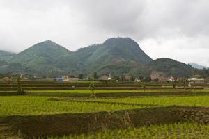 terrasse de rizière photo
