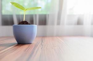 les arbres poussent dans des pots. aime les plantes. photo