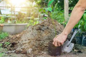personnes plantant des arbres dans des sacs en plastique photo
