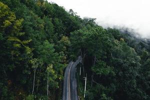 route dans la forêt saison des pluies nature arbres et brouillard voyage photo