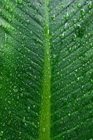 fond et fond d'écran de feuilles vertes avec des gouttes de rosée. photo