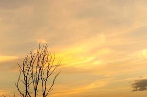 silhouette d'arbre mort et branche sèche avec beau ciel et ciel bleu photo