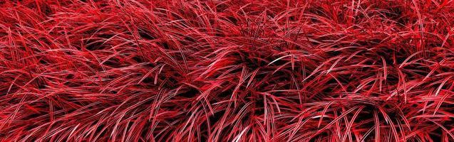 fond de texture d'herbe rouge photo