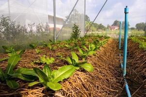 ferme maraîchère biologique des agriculteurs il existe de nombreuses sortes de légumes photo