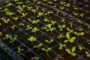 gros plan de légumes biologiques. photo