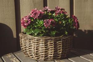 fleurs violettes dans un panier rond en osier sur une table en bois photo