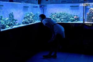 silhouette de femme regardant des aquariums avec des poissons dans l'océanarium photo