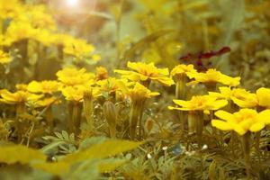 fleurs jaunes dans les rayons du soleil en automne photo