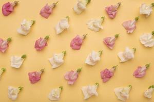mise à plat de belles fleurs de composition photo