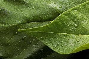 les détails des textures des plantes d'intérieur photo