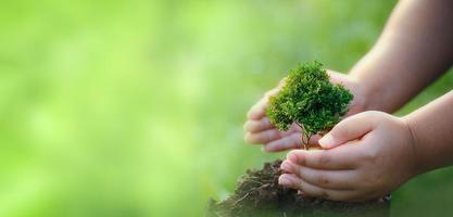 concept de rse et entreprise plantant des gaules d'arbres photo