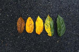 feuille d'automne dans la forêt verte, route de la forêt photo