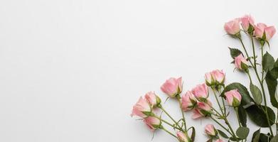 copiez les roses de l'espace. résolution et haute qualité belle photo