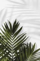 concept minimal abstrait laisse des ombres. résolution et haute qualité belle photo