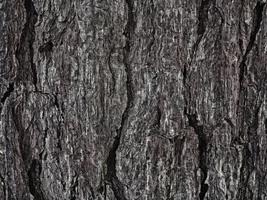texture bois sombre dans le jardin photo