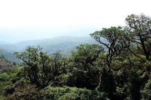 forêt d'arbres dense photo
