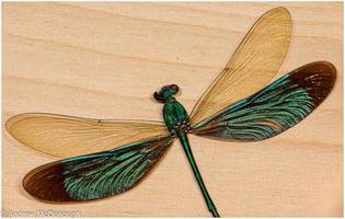 mouche de dragon colorée photo