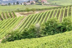 vignobles de la région vallonnée des langhe, italie du nord, site de l'unesco. photo