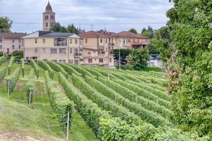 vignobles de la région vallonnée des langhe, italie, site de l'unesco photo