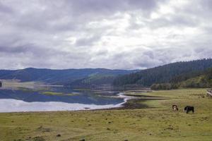 côté lac de yak dans le parc national de pudacuo à shangri la, yunnan chine photo