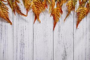 Feuille de fougère rouge automne plaque de bois blanc table fond de modèle vierge photo
