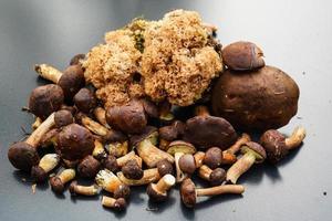 champignons sur le sol d'une forêt photo