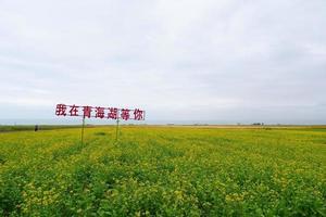 Champ de fleurs de colza et ciel nuageux dans la province de Qinghai en Chine photo