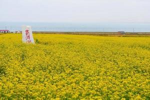mont de pierre et fleur de colza dans la province de qinghai en chine photo