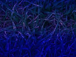 texture des plantes bleues photo