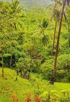 forêt tropicale de jungle avec des palmiers sur koh samui en thaïlande. photo