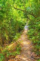 sentier de randonnée dans la jungle tropicale des palmiers de la forêt de koh samui en thaïlande. photo