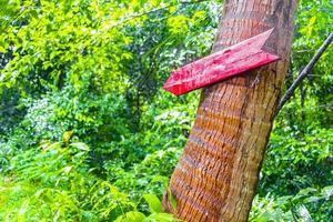 panneau de direction rouge vers la jungle tropicale de koh samui en thaïlande. photo