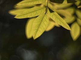 feuilles jaunes d'automne sur un arrière-plan flou photo