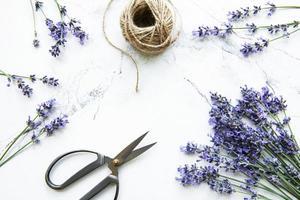 fleurs de lavande, ciseaux et corde photo