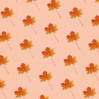 feuille d'érable d'automne photo
