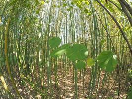 bambous d'en bas photo