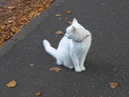 chat blanc sur le trottoir photo
